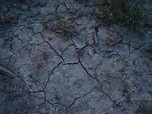 Cracks in Ground Lisa A. Wisniewski